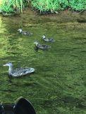 SQUASH LAKE 2